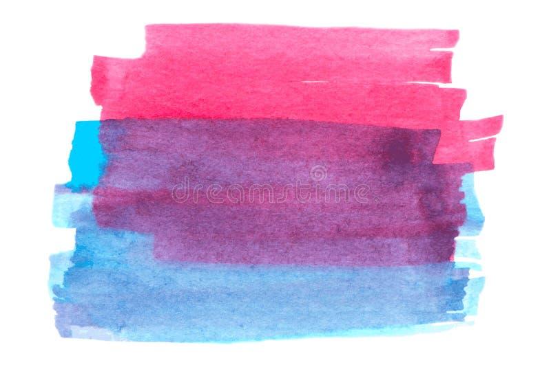 Rosa di vettore e struttura blu della pittura isolati sull'insegna bianco- dell'acquerello per la vostra progettazione illustrazione vettoriale
