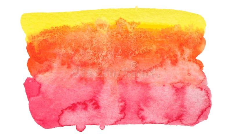 Rosa di vettore e struttura gialla della pittura isolati sull'insegna bianco- dell'acquerello per la vostra progettazione illustrazione vettoriale