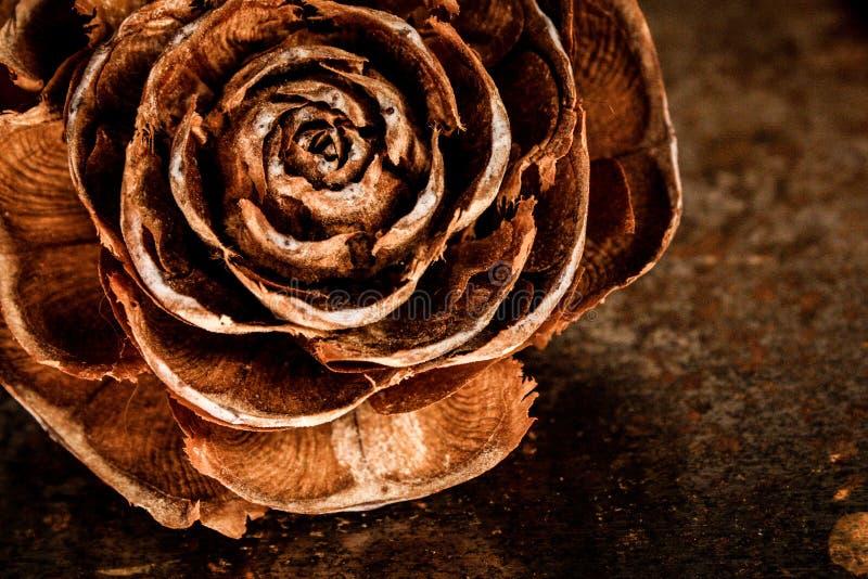 Rosa disecada royalty free stock image