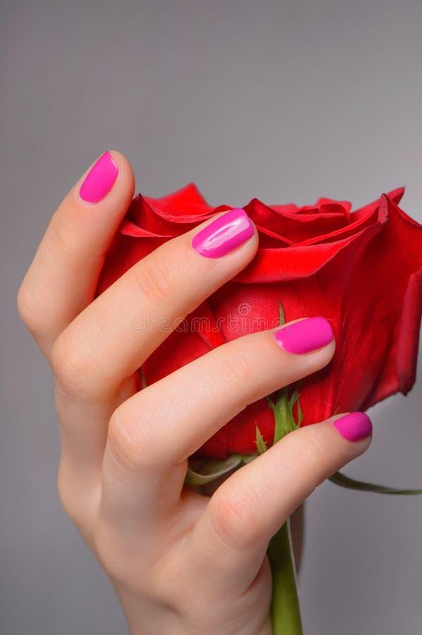 Rosa a disposizione. Primo piano della mano femminile che tiene una rosa contro il gre immagine stock libera da diritti