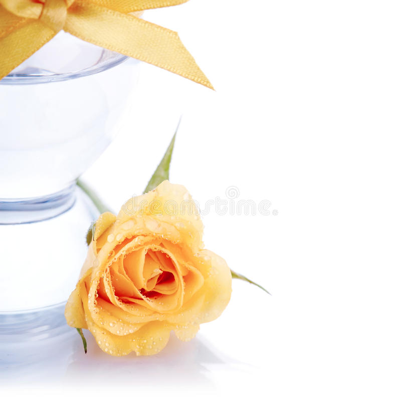 Rosa do amarelo. foto de stock royalty free