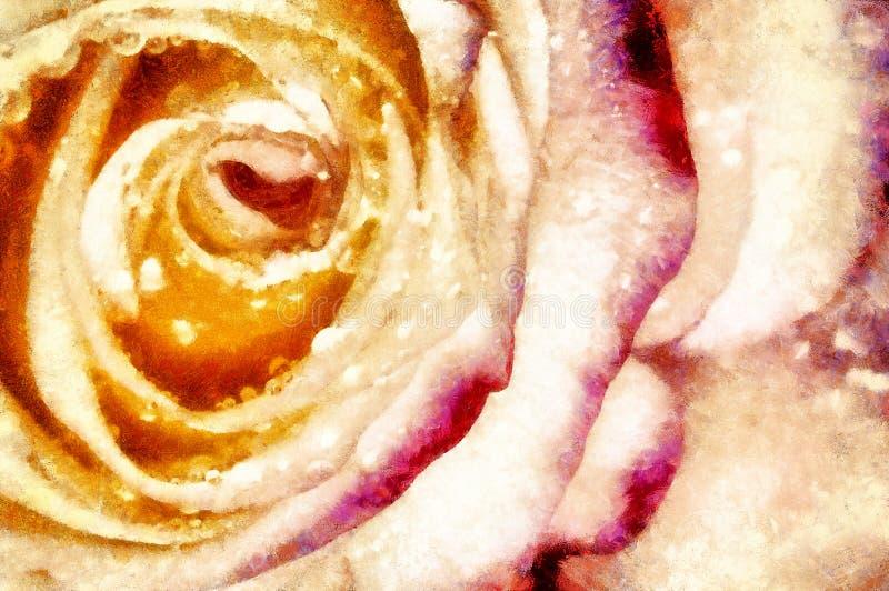 A rosa do rosa com água deixa cair, a natureza da mola, gotas de orvalho nas pétalas da flor, presente romântico, dia de mães, co ilustração do vetor