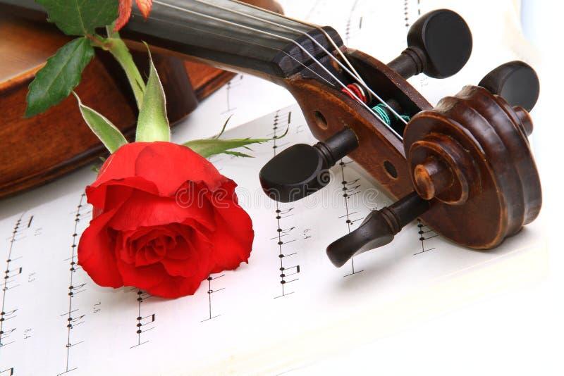 Rosa do vermelho do Valentim fotos de stock