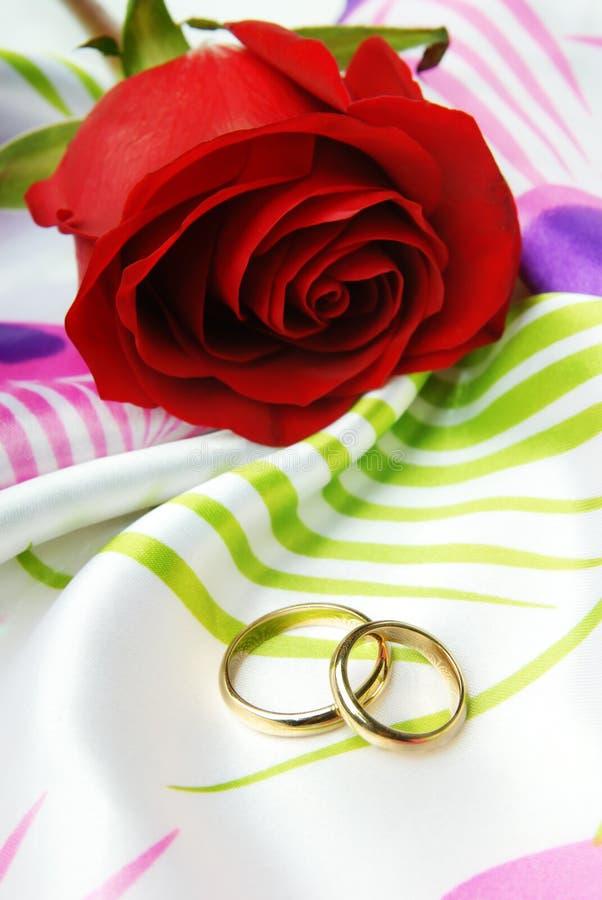 Rosa do vermelho e anéis dourados fotografia de stock royalty free