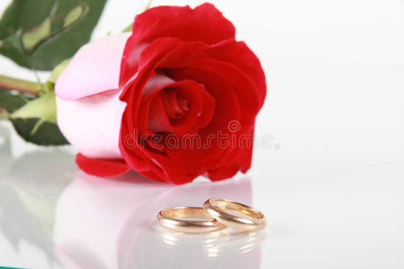 Rosa do vermelho e anel de casamento imagem de stock