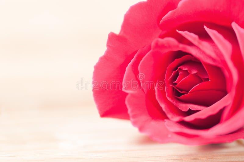 Rosa do vermelho em um fundo de madeira fotografia de stock royalty free