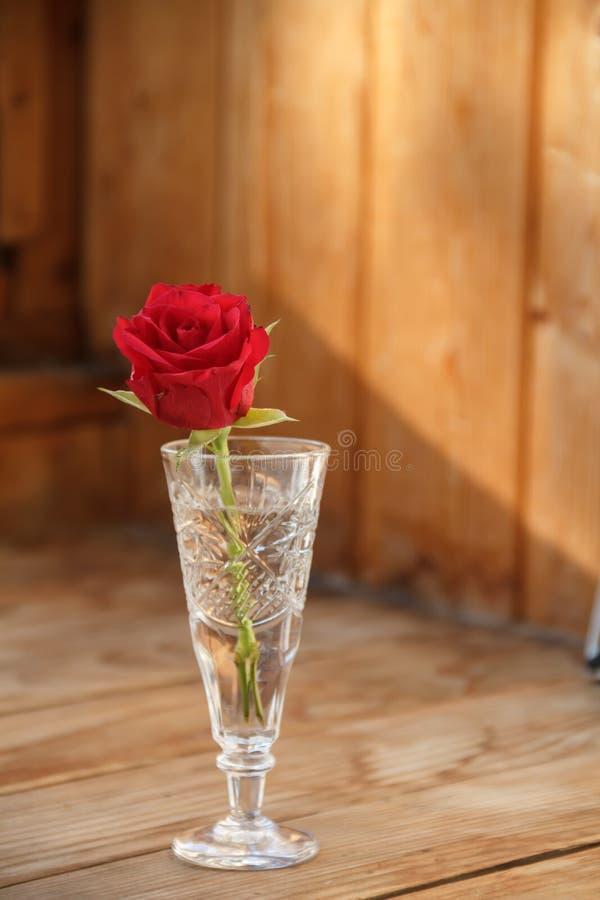 Rosa do vermelho em um vermelho do vidro Rosa imagem de stock