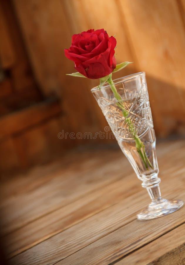 Rosa do vermelho em um vidro imagem de stock royalty free