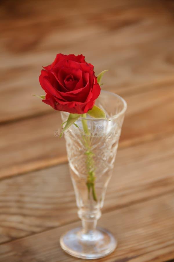 Rosa do vermelho em um vidro Vermelho Rosa fotografia de stock
