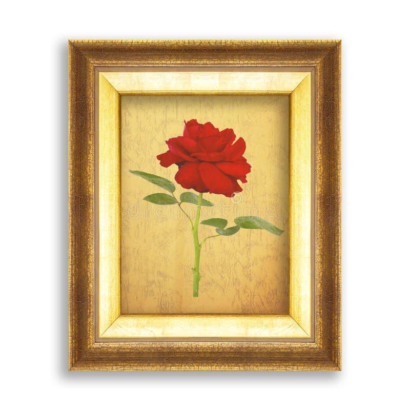 Rosa do vermelho no quadro dourado com papel vazio do grunge para seu pictur fotos de stock royalty free
