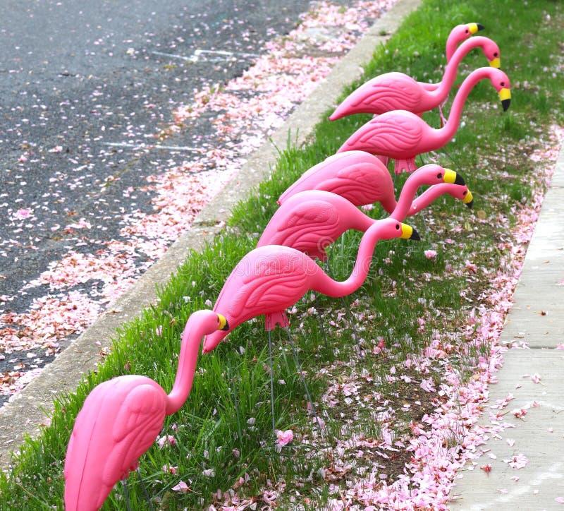 Rosa dos flamingos e alimento de procura plástico no freio imagem de stock