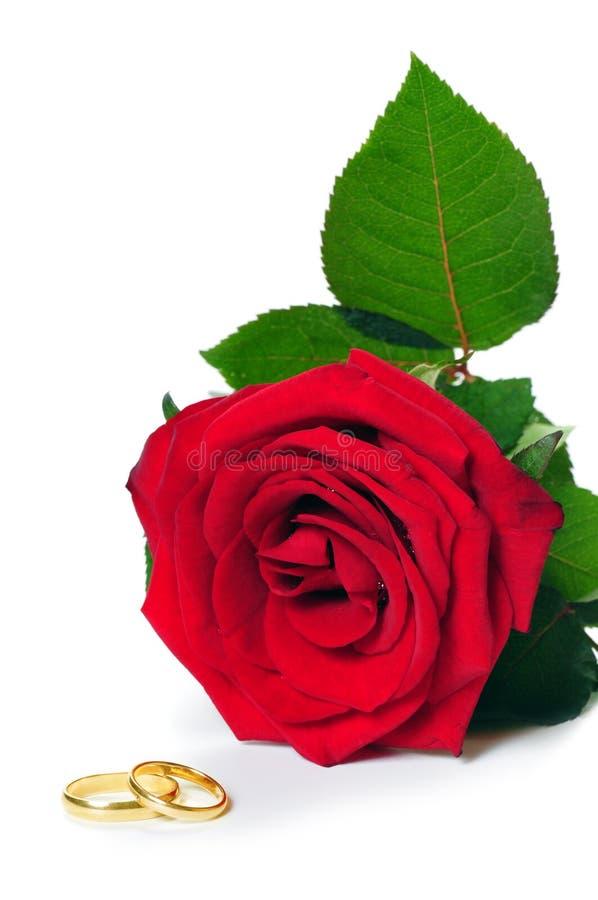 Rosa e anéis dourados imagem de stock royalty free
