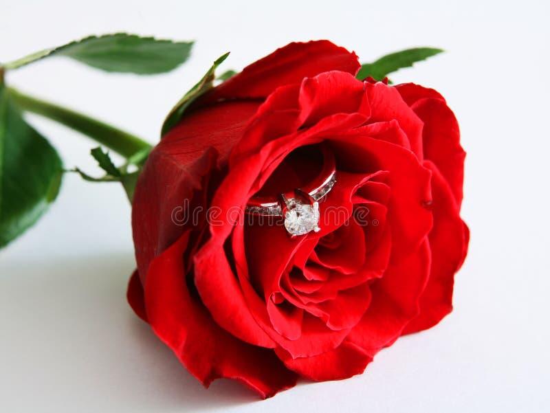 Rosa e anel 2 imagem de stock
