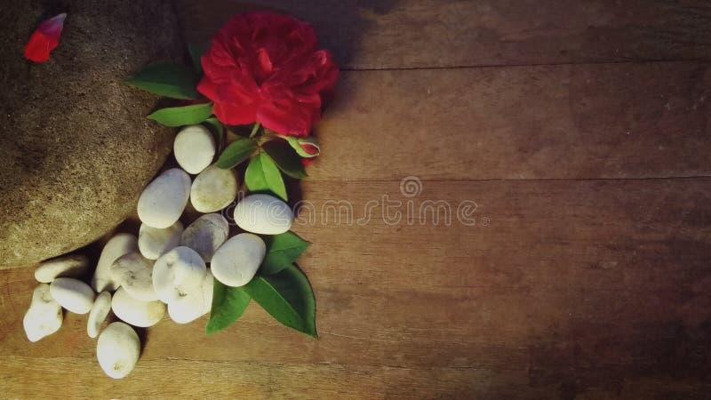 Rosa e ciottolo e fondo di legno fotografia stock