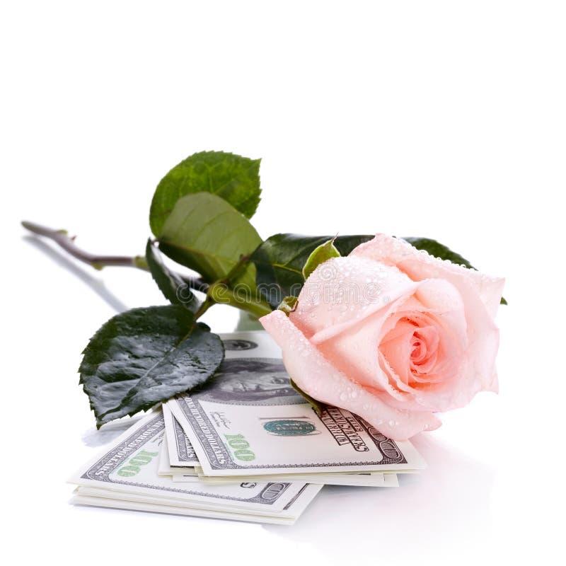 Rosa e dólares imagens de stock royalty free