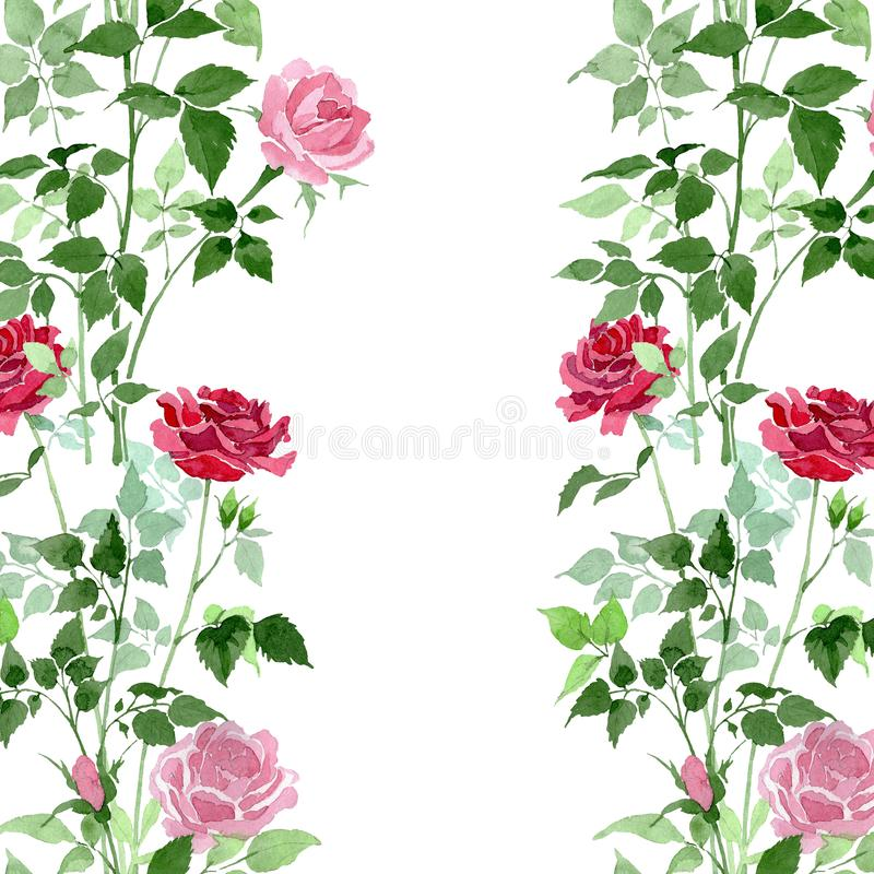 Rosa e fiori botanici delle rose rosse del cespuglio Insieme dell'illustrazione del fondo dell'acquerello Modello senza cuciture  illustrazione di stock