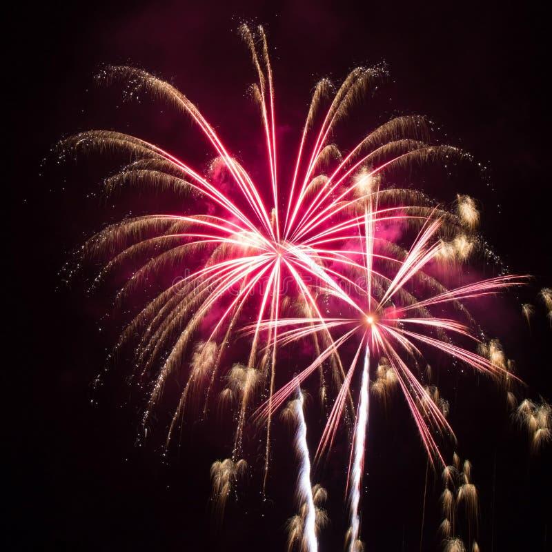 Rosa e fuochi d'artificio dell'oro fotografia stock