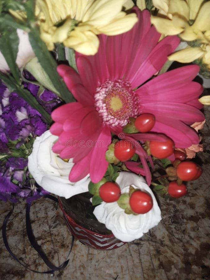 Rosa e garofano fotografia stock