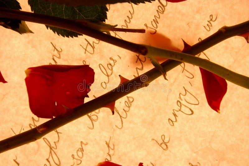 Rosa e letra fotografia de stock