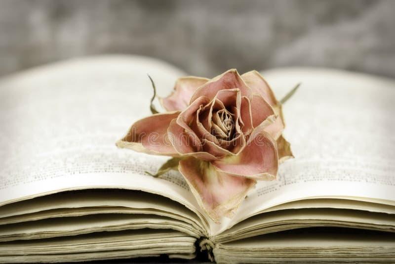 Rosa e livro imagem de stock