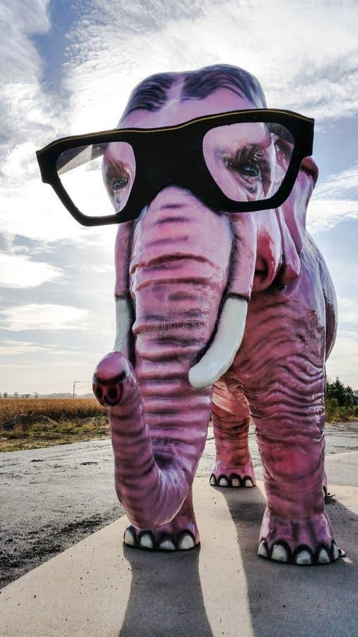Rosa elefant med roliga exponeringsglas royaltyfri fotografi