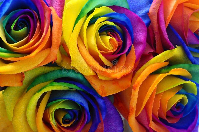 Rosa eller lycklig blomma för regnbåge arkivbild