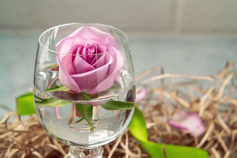 Rosa em um vidro da água gasosa com bolhas - um molde para um cartão imagem de stock