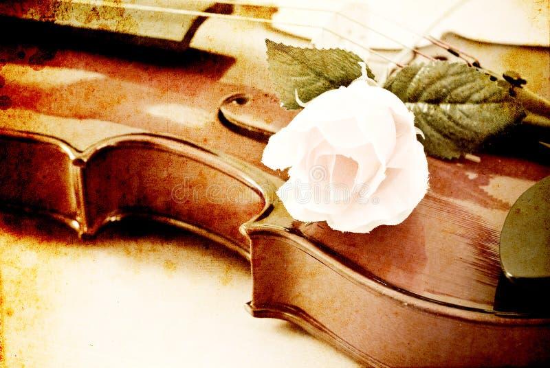 Rosa em um violino foto de stock royalty free