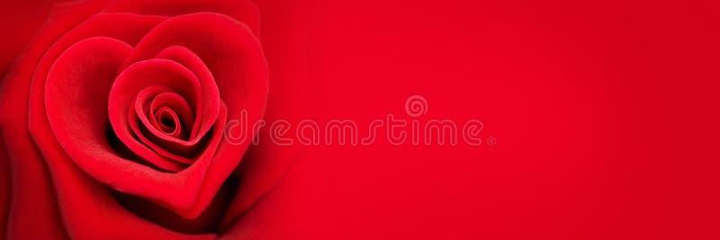 Rosa en la forma de un corazón, bandera del rojo del día de tarjetas del día de San Valentín fotografía de archivo