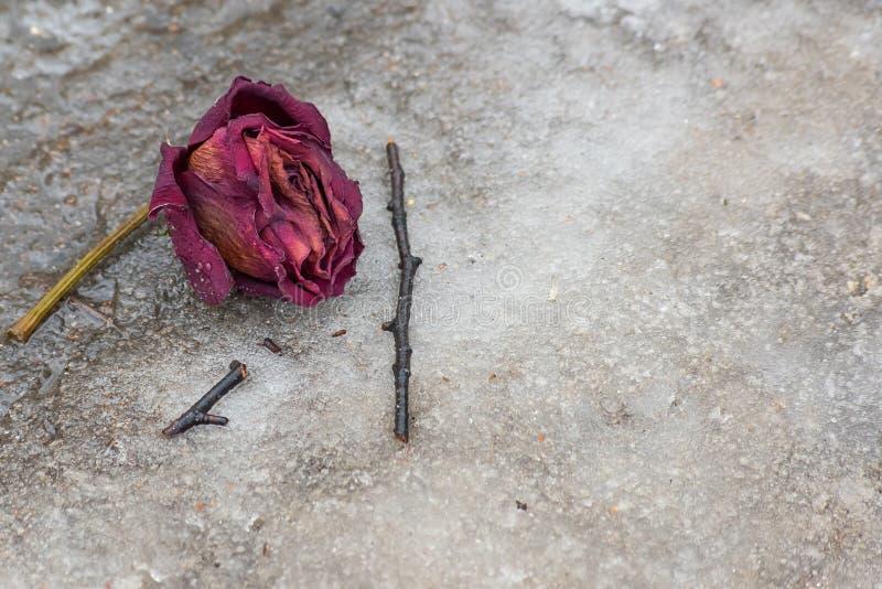 Rosa encontra-se no gelo sujo fotografia de stock