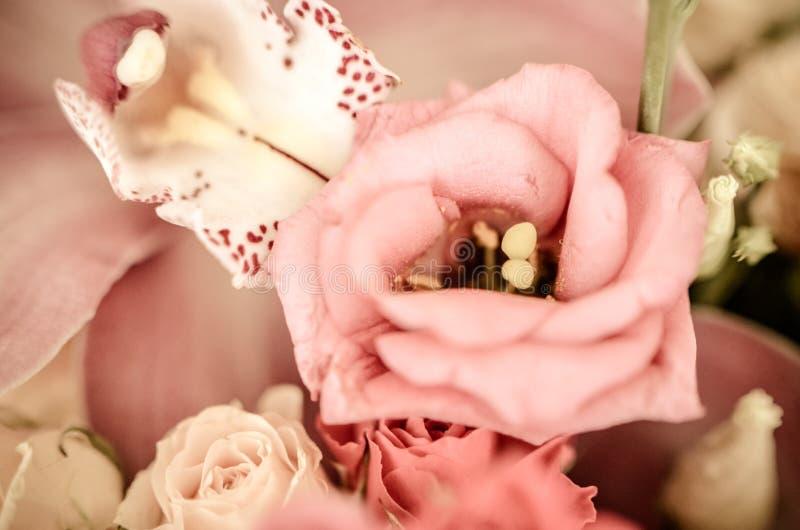 Rosa eustoma i den härliga mjuka buketten i tappningstil royaltyfri fotografi