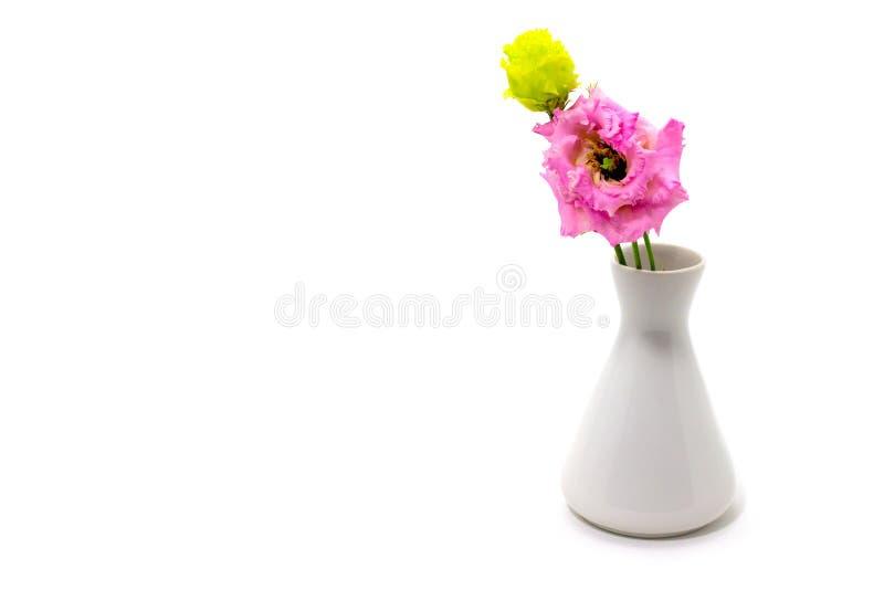 Rosa eustoma, lisianthus i en vit vas på ett fritt utrymme för vit bakgrund för text arkivbilder