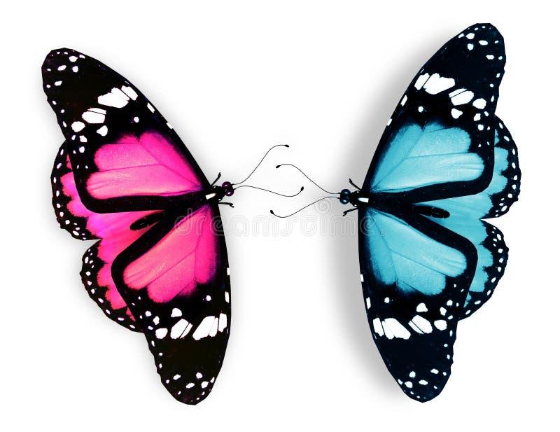 Rosa färg- och blåttfjäril på vit royaltyfri illustrationer