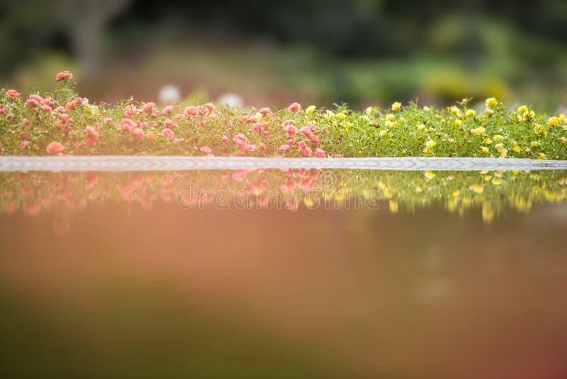 Rosa färg- och gulingverdolga, gemensam purslane, portulacaoleracea fl royaltyfria foton