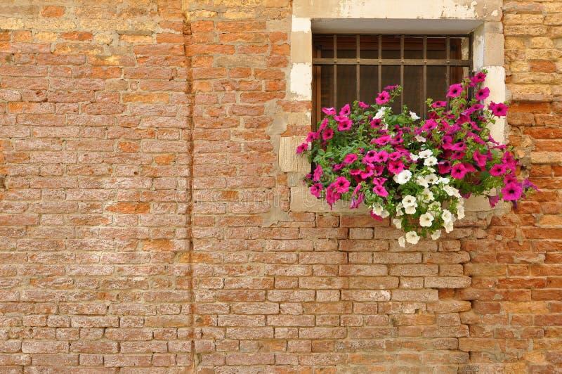 Rosa färg- och vitpetuniablommor på fönsterbrädan av ett tegelstenitalienarehem arkivfoton