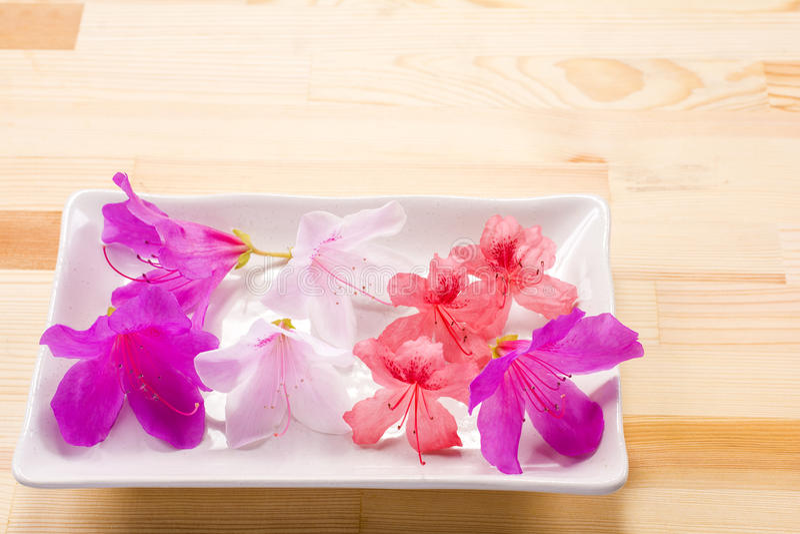 - rosa färgblomma - gräsplansidor royaltyfri fotografi