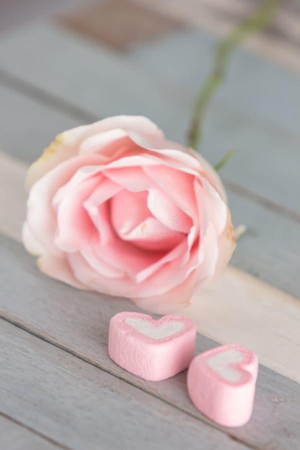 Rosa färgblomma på tabellen fotografering för bildbyråer