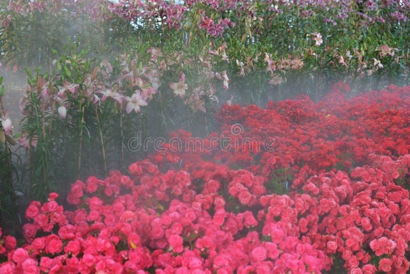 Rosa färgblommaträdgård arkivfoto
