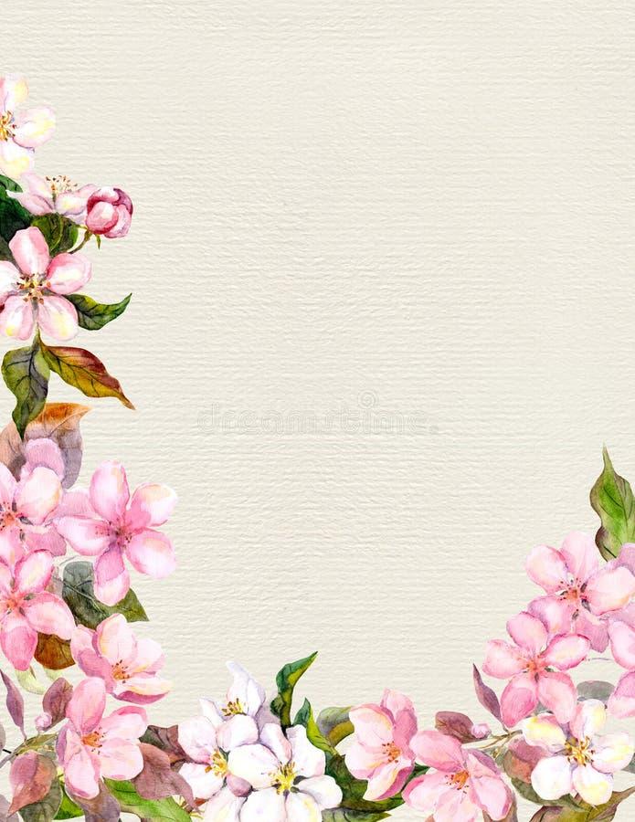 Rosa färgblommor - äpple, körsbärsröd blomning den blom- ramen inramniner serie Tappningvattenfärg på pappers- bakgrund vektor illustrationer