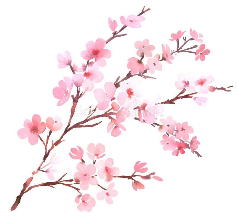 Rosa färgblomning för körsbärsrött träd stock illustrationer