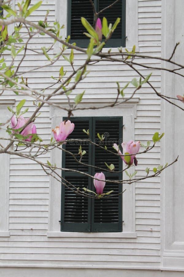 Rosa färgen blommar att blomma framme av den sydliga kolonin i Mississippi royaltyfria bilder