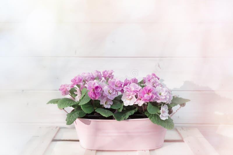 Rosa färgen blommar i blomkruka royaltyfri foto