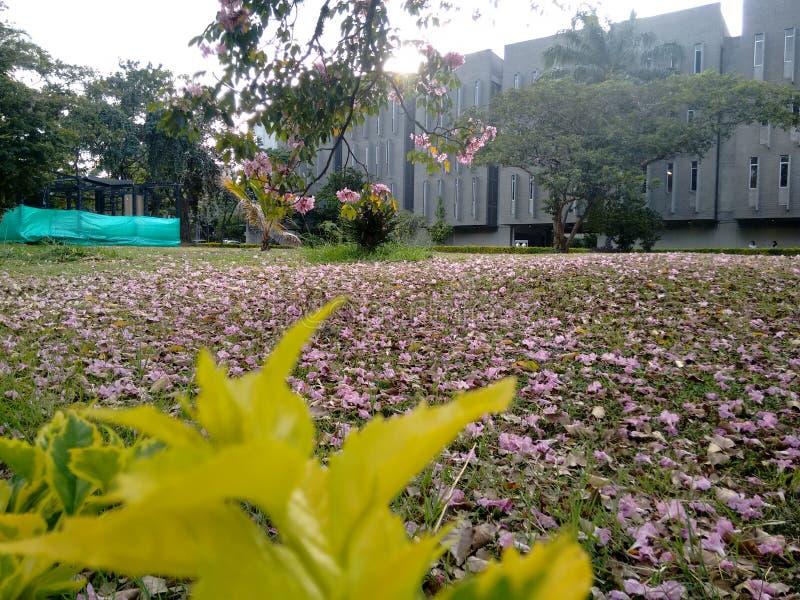 Rosa färgen blommar naturen arkivfoton