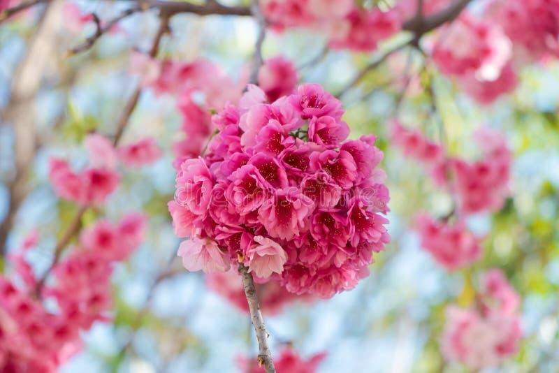 Rosa färgen blomstrar blommor royaltyfri bild