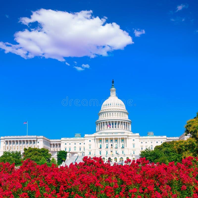 Rosa färgen för KapitoliumbyggnadsWashington DC blommar USA royaltyfri bild