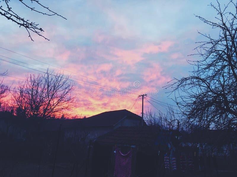 Rosa färger royaltyfria bilder