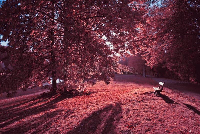 Rosa färger av hösten i Tervuren parkerar, Belgien fotografering för bildbyråer