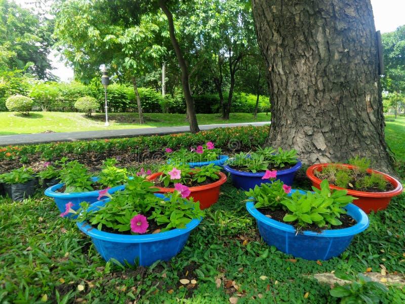 Rosa färger blommar i färgglad rabatt i trädgården royaltyfri bild
