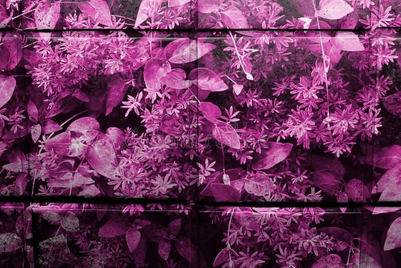 Rosa färger/lilor mönstrade glasade köktegelplattor i closeupsikt arkivfoton