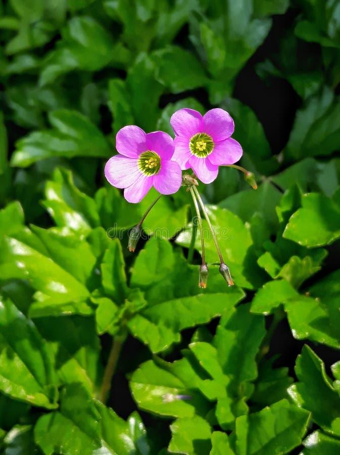 Rosa färger på den gröna blomman arkivbilder